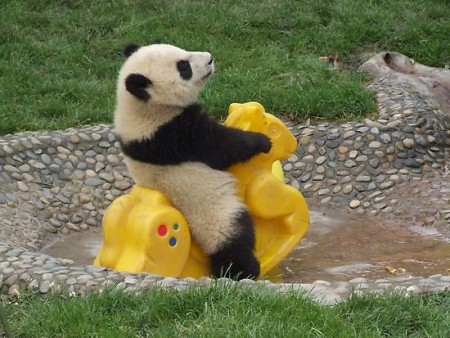 панды совсем как люди
