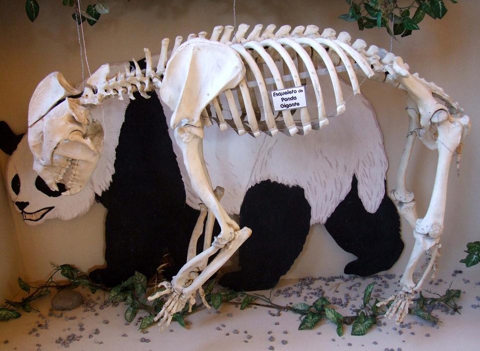 skelet-pandy.jpg